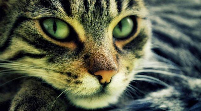Кішки використовують подвійний спосіб фільтрації сонячних променів.