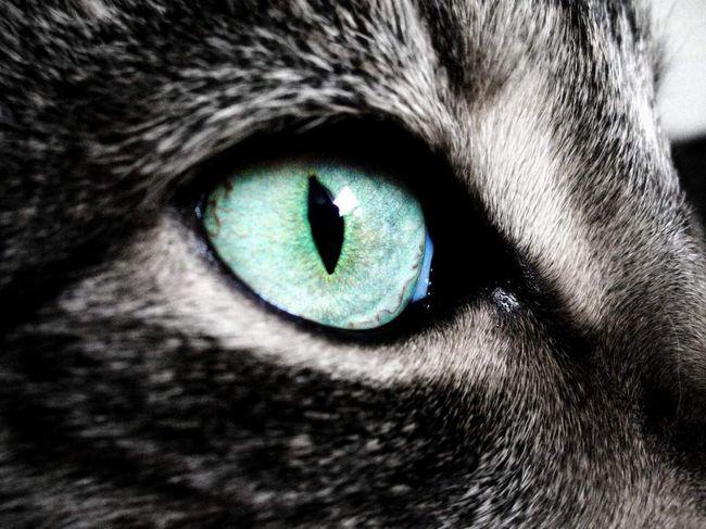 Особлива будова ока дозволяє кішкам бачити не так, як люди.