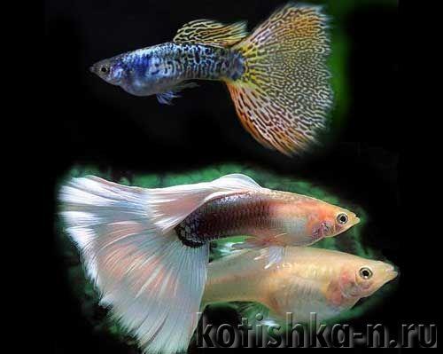 Чому вмирають рибки в моєму акваріумі?