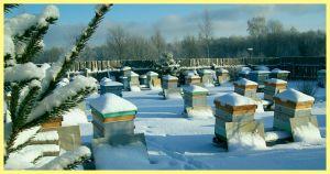 Підготовка до зими пасіки