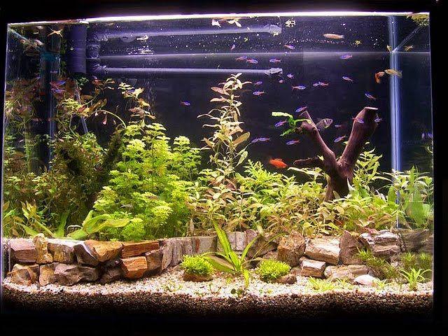 Підживлення акваріумний флори