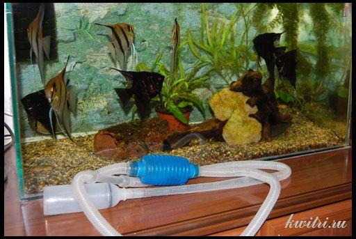 Підміна води в акваріумі