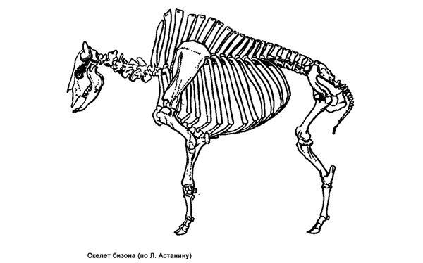Підтип хребетні, або черепні (vertebrata)