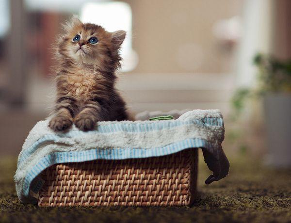 Поява кошеня в будинку