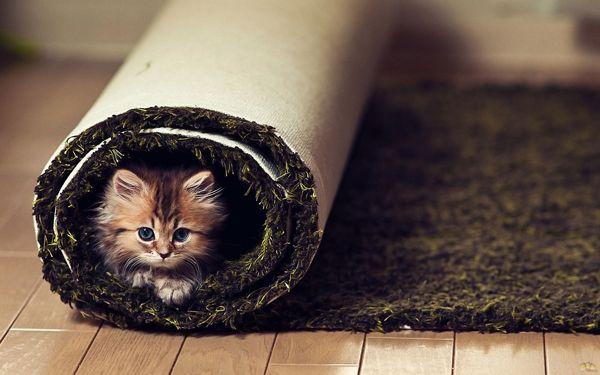 Кошеня в будинку
