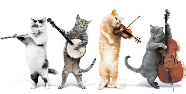 Група Jingle Cats