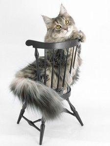 Користь кішок