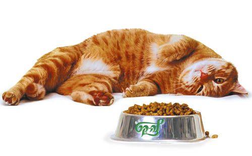 Сухий корм для кішки