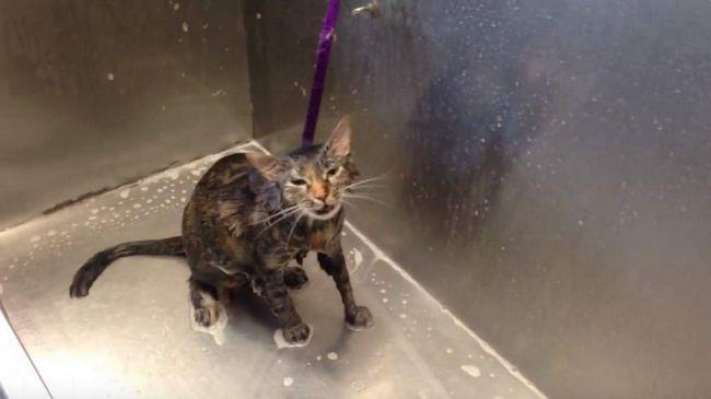 Кішка не хоче митися і каже
