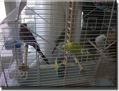 Приміщення для утримання птахів