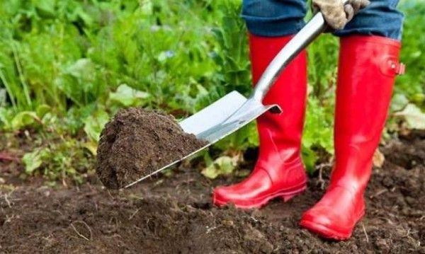 Огородник розкидає добриво лопатою