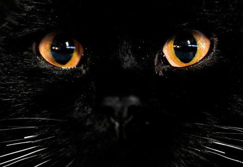 Допомога коту при сльозотечі