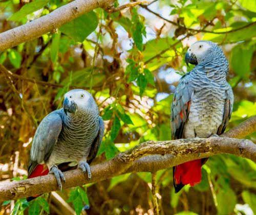 Самець і самка на дереві
