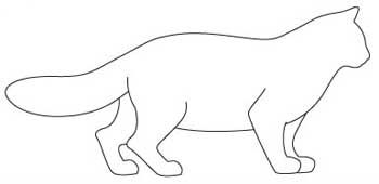 Порода кішок Рагамаффін. тіло
