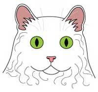 Порода кішок Селкірк рекс. морда