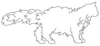 Порода кішок Селкірк рекс. тіло