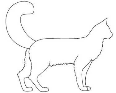 Кішка породи Сомалі. тіло