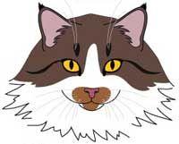 Порода Норвезька Лісова Кішка. морда