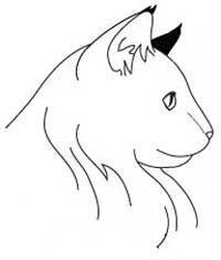 Порода Норвезька Лісова Кішка. голова