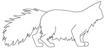 Порода Норвезька Лісова Кішка. тіло