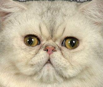 Фото 2 Породи кішок