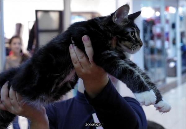 Фото 7 Породи кішок