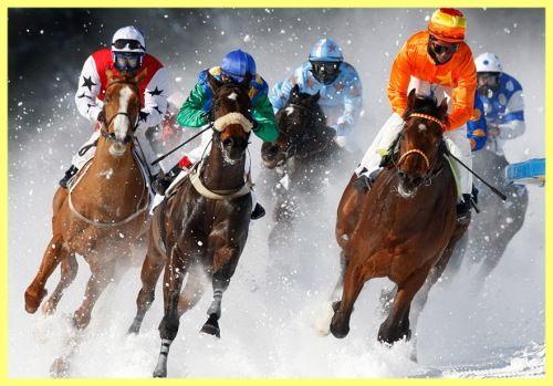 Породи коней з фото і описом