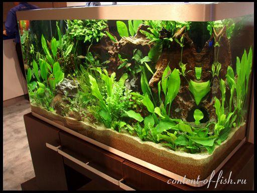 Посадка акваріумних рослин