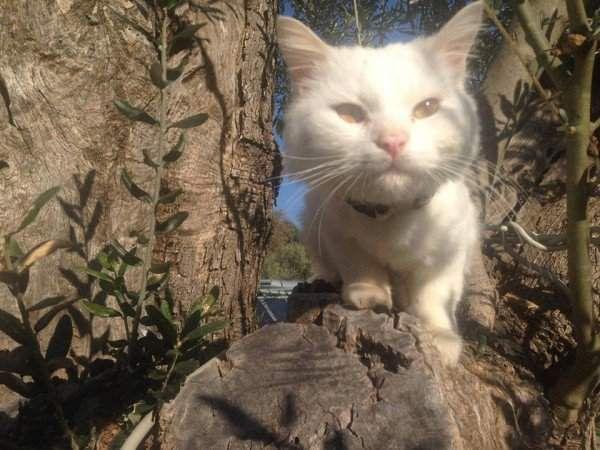 Загубився кіт біженців повернувся додому
