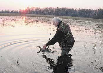 Поведінка мисливця під час полювання з підсудний качкою