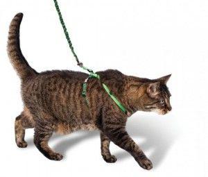 Поводок для кішки