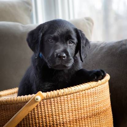 Правила та особливості утримання домашніх тварин