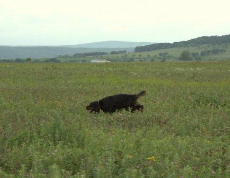 Правила випробувань лягавих собак по болотно-лугової дичини