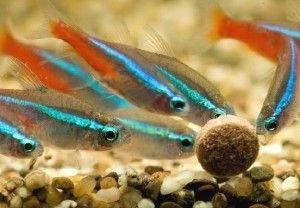 Правила годування акваріумних рибок