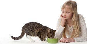 Годувати кастрованого кота