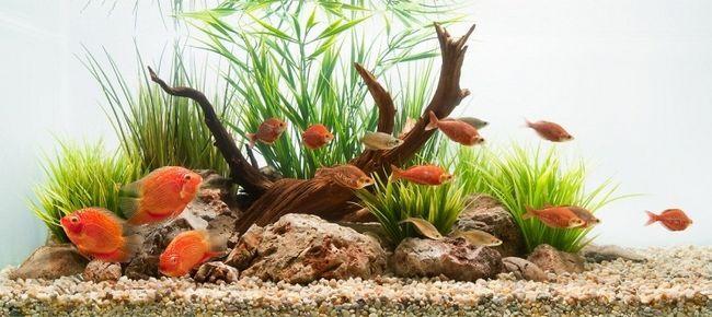 Правила підбору декорацій для акваріума