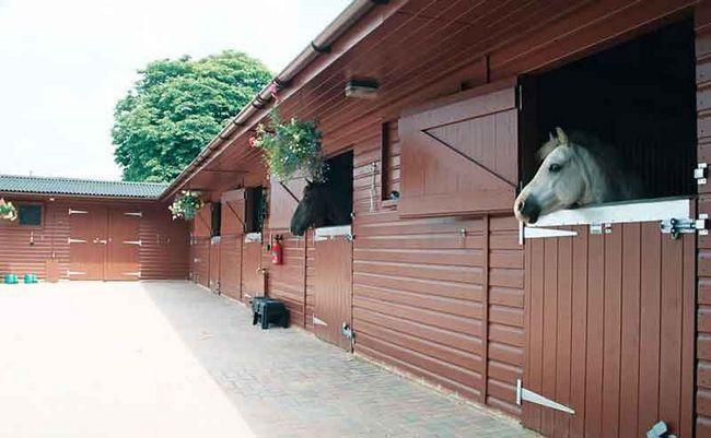 Правила утримання коней: норми, вимоги
