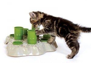 Правильне харчування кішок