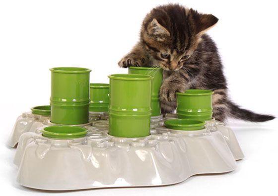 Правила харчування кішок