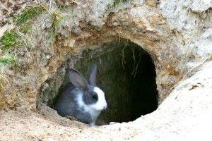 Переваги та недоліки утримання кролів в ямах