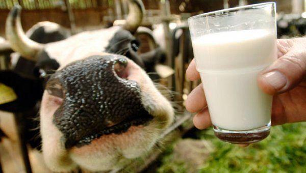 Причини гіркоти коров`ячого молока