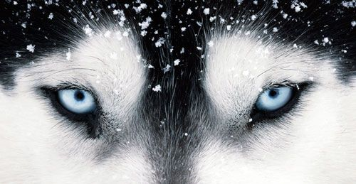 Причини і лікування коньюктивита у собаки