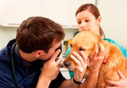 огляд очей у ветеринара