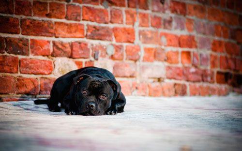 Причини і допомогу собаці при судорожному припадку