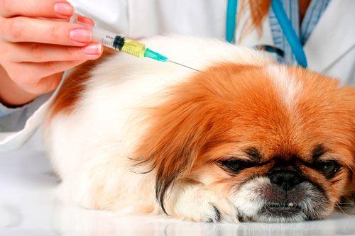 лікування папіломи вакциною
