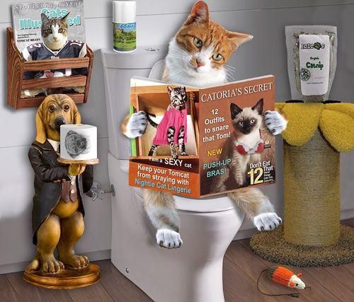 Причини виникнення і лікування запору у котів