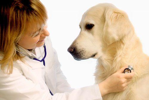 лікування кашлю у собаки