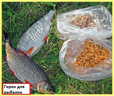 Приготування гороху для риболовлі