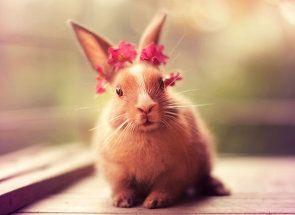 Приручаємо домашнього кролика