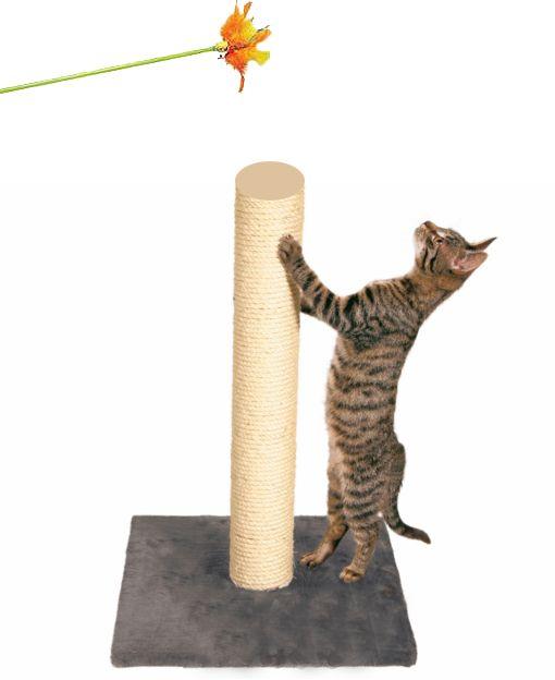 Привчання кішки до когтеточке